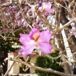 Прекрасные цветы на деревьях
