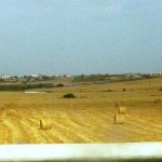 Валики сена на поле