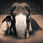 Слон и девушка